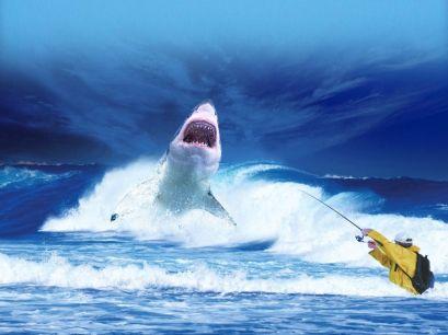 shark-2102330_1920